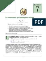 lab7 (1).pdf