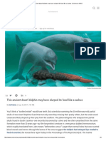 This Ancient Dwarf Dolphin May Have Slurped Its Food Like a Walrus _ Science _ AAAS