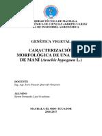 Caracterización Morfológica de La Líne 31 de Mani (Arachis Hypogaea L.)