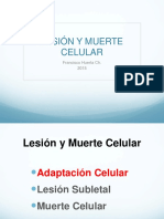 1-2lesion-y-muerte-celular.ppt