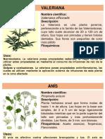 Plantas Medicinales de Cajamarca