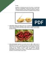 LAS-PLANTAS-NATIVAS-DEL-PERÚ (1).docx
