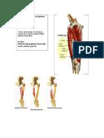 yoga dib anatomia.docx