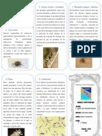 TRIPTICO - ANIMALES INVERTEBRADOS QUE CAUSAN ENFERMEDADES.docx