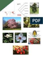 03 Magnoliaceae.pdf