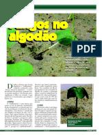 Fungos Ricardo Silva e Glauciane Coelho