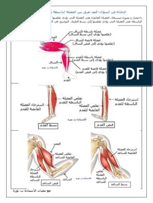 كيف نفرق بين العضلة الباسطة والعضلة القابضة