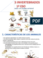 animales invertebrafos.ppt