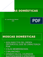moscasdomsticas-090607173713-phpapp01