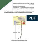 1.3- Elementos de Neuroanatomía (2016) Galli%2c J
