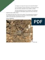Cómo Influye El Área de Los Líquenes en La Riqueza de Especies de La Familia Hersilidae