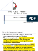 Human Nervous System Class Lecture