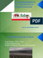 Manejo de Frutilla.Agosto 2012. BP-NA.ppt