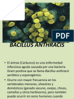 bacillusanthracis-101114213822-phpapp01 (1).pptx