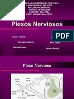Exposicion de Plexos