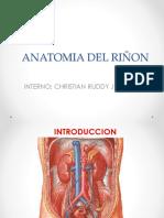 Anatomia de Riñon
