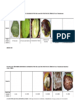 Claves Para Colecta de Material Vegetal Infectado de M. Roreri - Monilisis en CACAO
