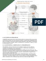 As Glândula Supra-Renais - funções, saúde e exercícios.pdf