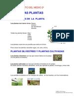 Tema 11 las plantas.pdf