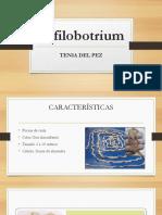 Difilobotrium Tenia Del Pez Proyeccion Social