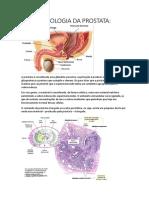 Histologia Da Prostata