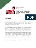 Informe Del Clavel