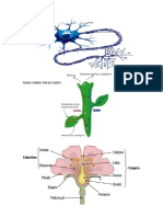 Celula Nerviosa