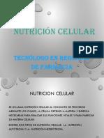 Biologia Nutricion Celular