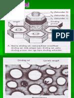 2. Dinding & Membran Sel