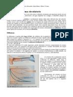 02 Fisiologia Il Sistema Circolatorio