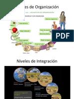 Niveles de Organización y Ciclos Biologicos