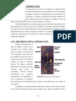 germinacion.pdf