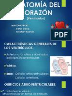 Anatomía Del Corazón [Ventrículos y Atrios]