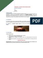 PRINCIPIOS BÁSICOS FORMABAN LA ESTRUCTURA DE EDUCACIÒN.docx