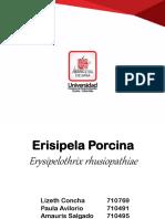 erisipelaporcina-170222030712