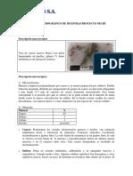 Análisis Petrográfico Distrito Minero Nechí