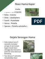 Klasifikasi Hama Kaper