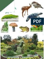 139978109-46268354-FORM-2-Chap-03-Biodiversity-1
