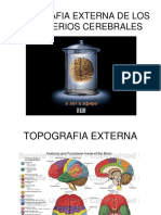 Topografia Externa de Los Hemisferios Cerebrales