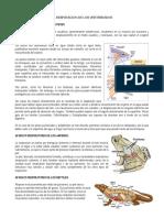 RESPIRACION DE LOS VERTEBRADOS.docx