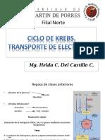 BIOQUIMICA Ciclo de Krebs Pptx