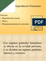 Aparato Reproductor Femenino Romina