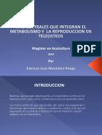 Expo Paper Repro Teleosteos Ederson Montalico