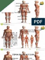 S-muscular.pptx