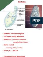 protozoa unit four F.Y.ppt