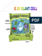 Different Parts and Functions of Plant Cell