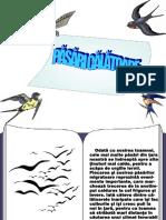 0_pasaricalatoare.ppt