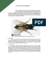Life Cycle of Housefly