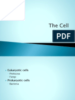Copy of Copy of the Prokaryotic Cell
