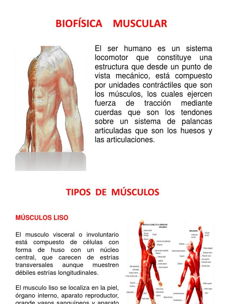 Único Grises Anatomía Mc Humeante Festooning - Imágenes de Anatomía ...